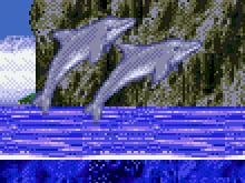 Ecco the Dolphin photo