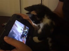 Smash Bros. cat photo