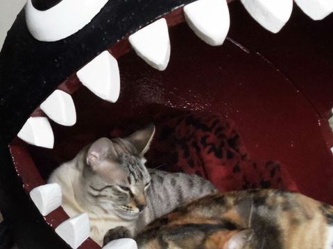 Chain Chomp photo