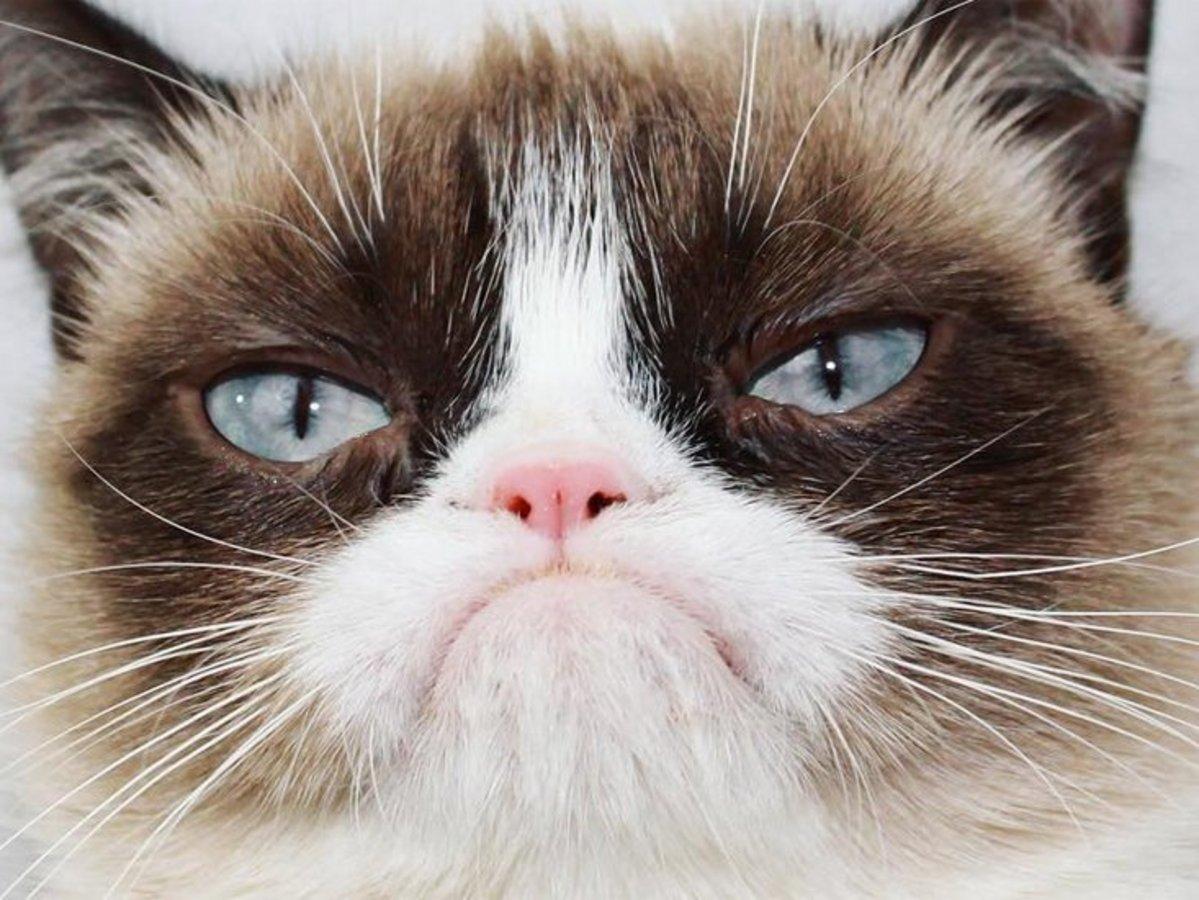 grumpy cat игра