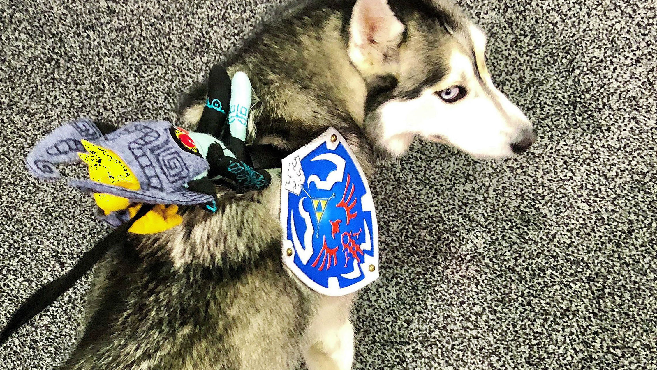 And now an adorable Wolf Link cosplay from a very good dog screenshot
