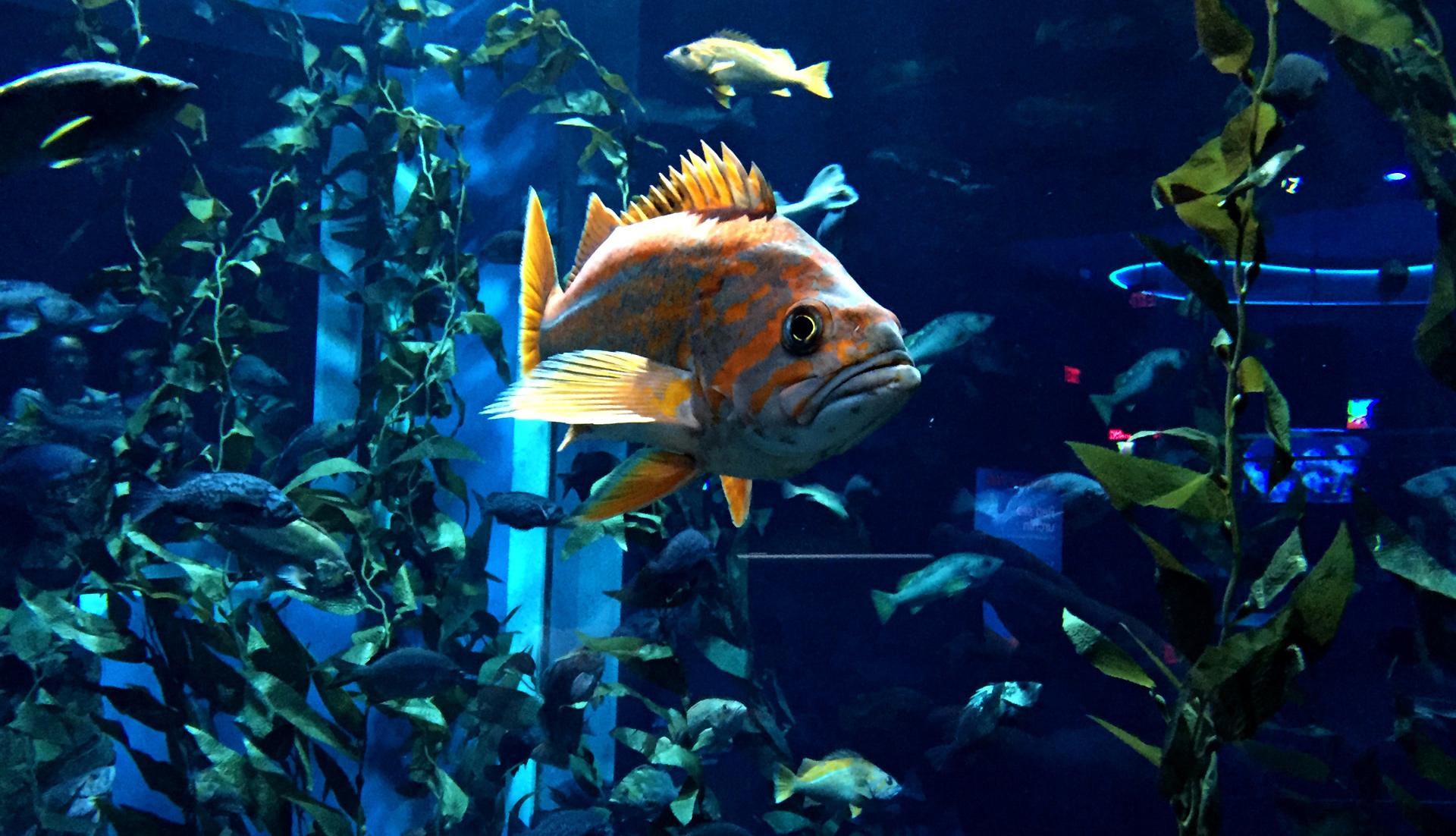 All video game conventions should happen near an aquarium screenshot