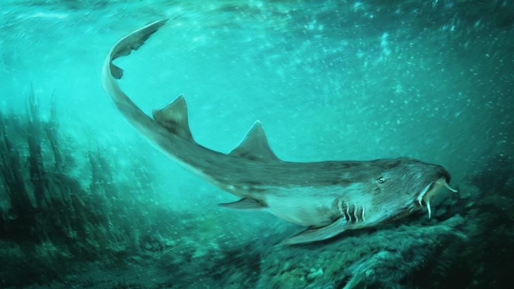 Ancient shark species named after Namco's Galaga screenshot