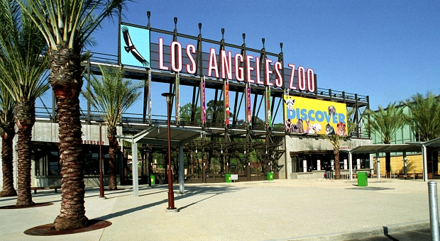 The animals of the l a zoo make our e3 2010 predictions for How much to park at lax