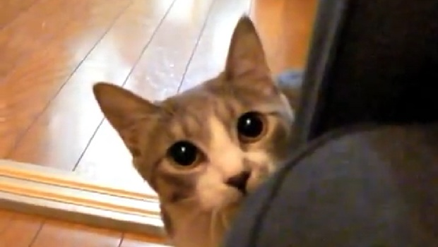 The Daily Hotness: Stalking Cat screenshot