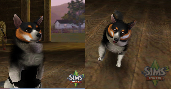How To Create A Warrior Cat Sims  Pets