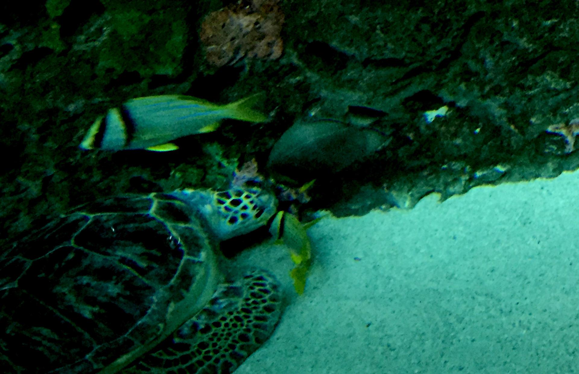 """Pescado limpiado de la tortuga marina """"width ="""" 1920 """"height ="""" 1242"""