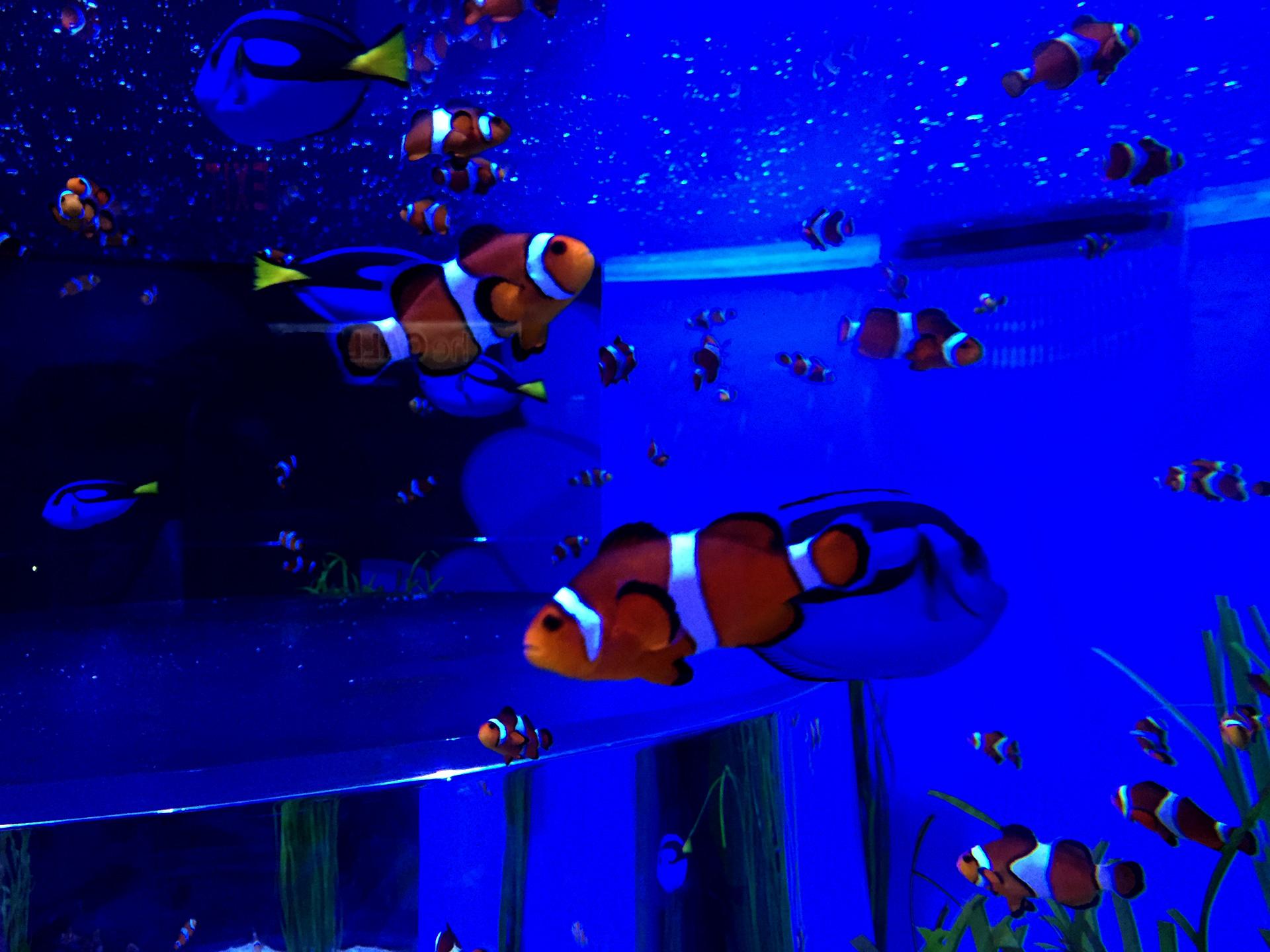 El pez payaso y las espigas azules se ven muy bien juntos