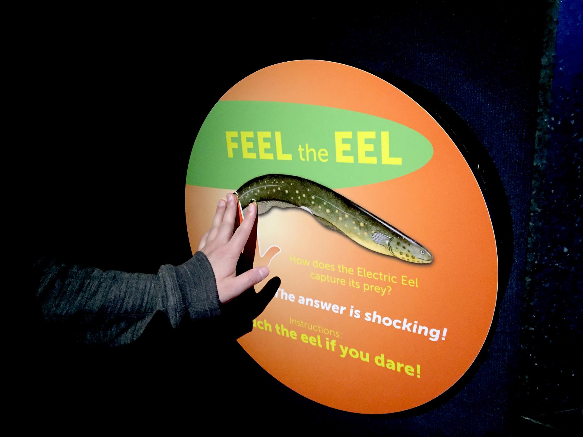 La demostración de la anguila eléctrica fue un favorito de la multitud