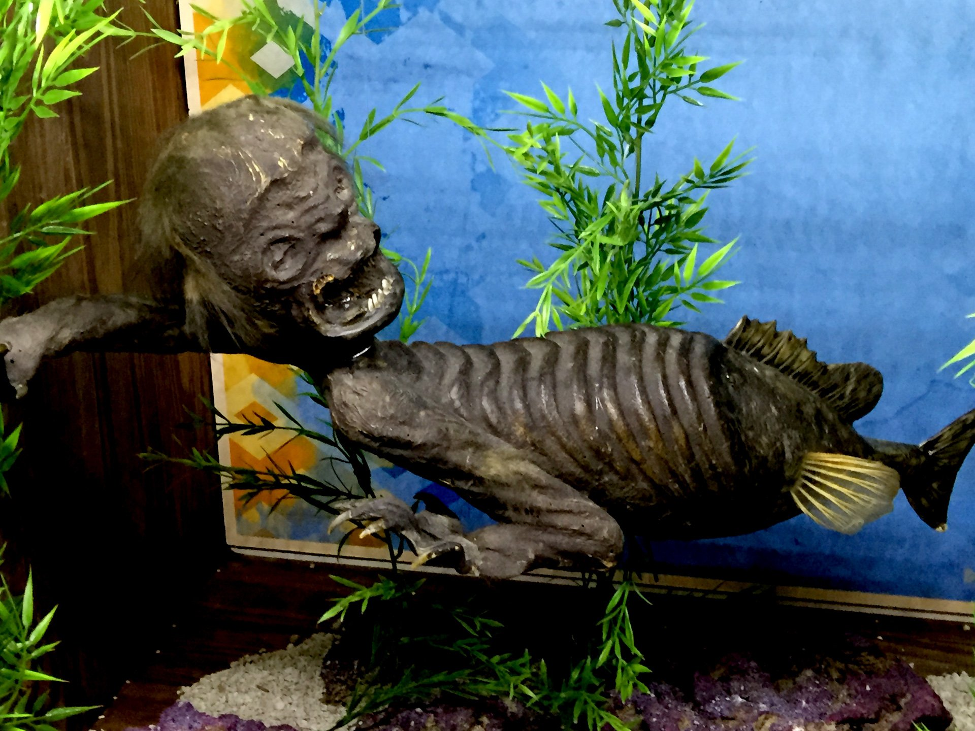 Poniendo los Ripley en el acuario de Ripley de Canadá