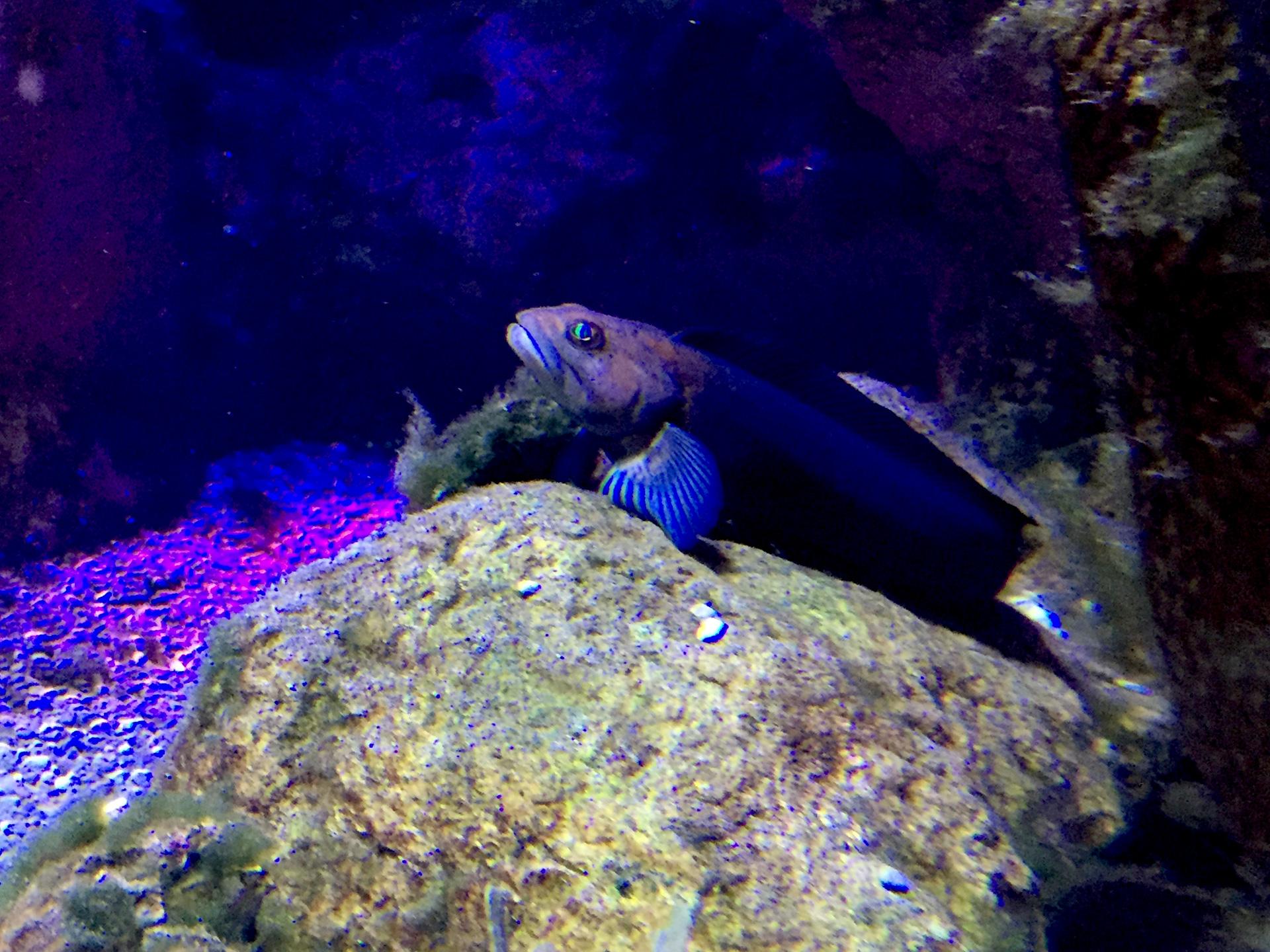 Algunos peces saben cómo adoptar una pose