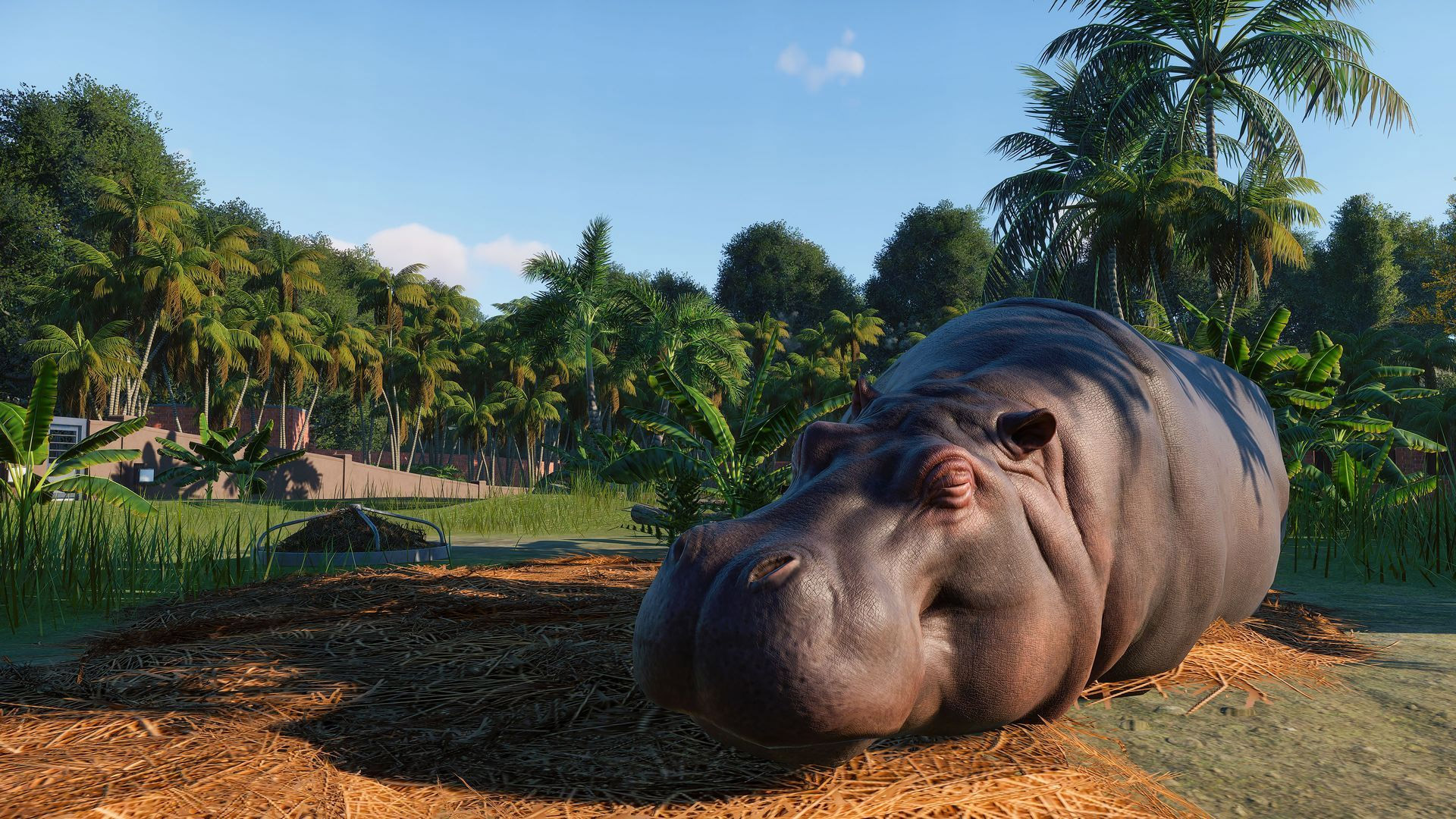 A hippopotamus in Planet Zoo