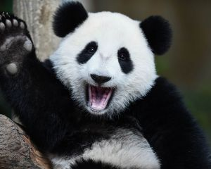 Panda20XX